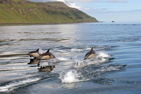 Dolphin procession