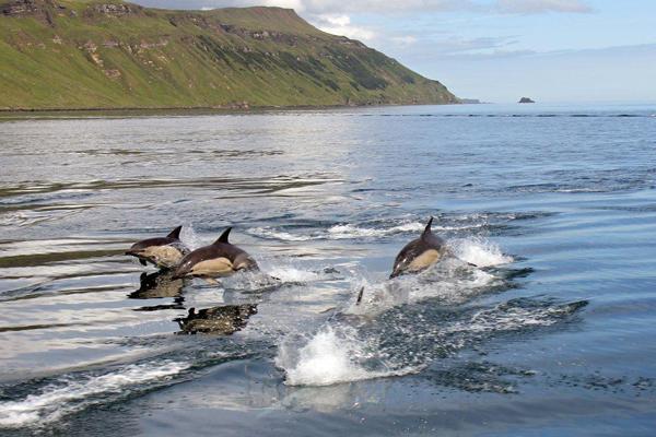 Dolphin procession