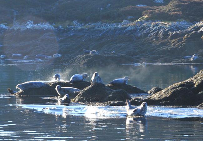 Rona spring seals